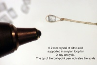 A single crystal of citric acid supported on a nylon loop. The ball point pen shows the scale